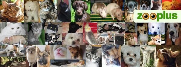 Tanti animali e un unico shop: zooplus.