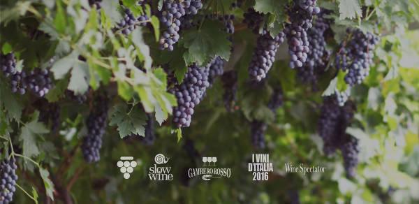 Vinitaly Wine Club, l'enoteca online per il vino di qualità