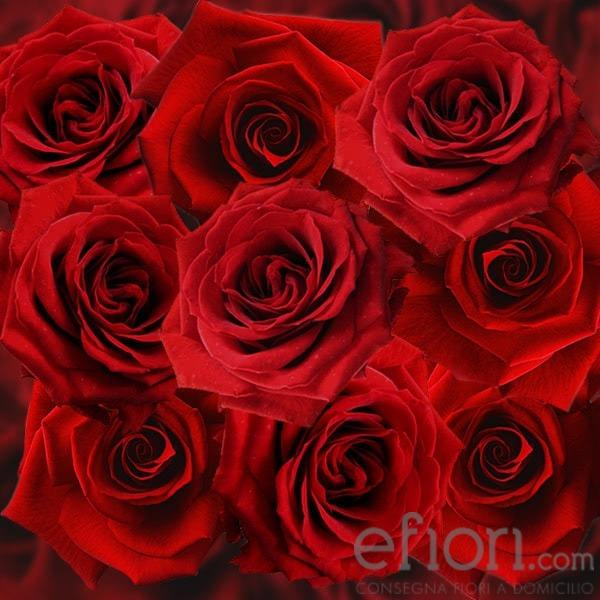 un grande classico: le rose rosse
