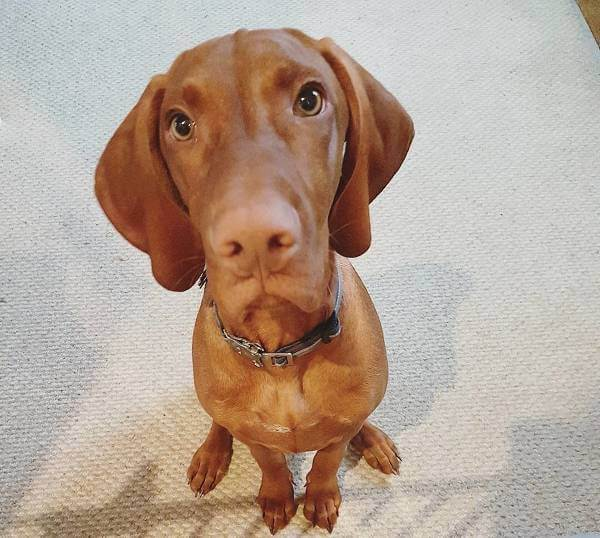 Pure Pet Food: un innovativo cibo per cani