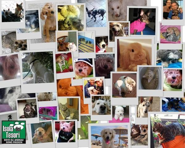 Il negozio online per gli amanti degli animali