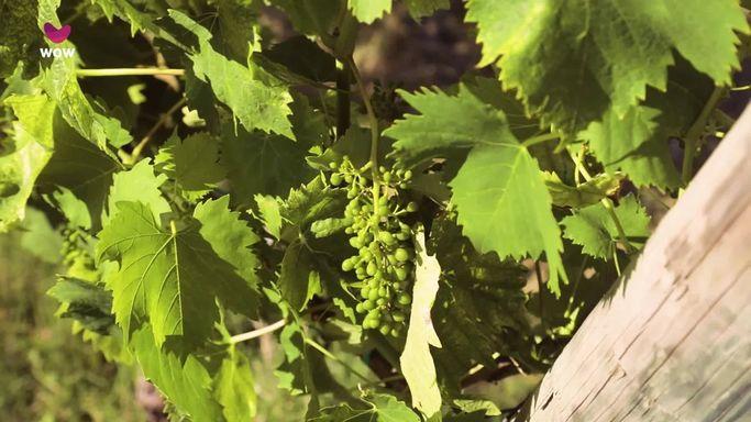 I vigneti da cui proviene il vino